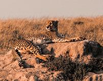 Serengeti 2018