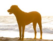 Shining dog