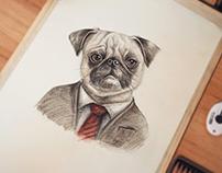 Pug in suit