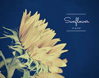 Flower photography collection for spring