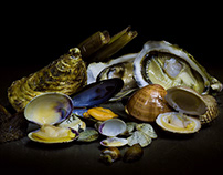 SEAFOOD PHOTOGRAPHY: mussels, clams, oysters