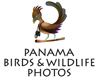 Panama Birds & Wildlife Photos Logo