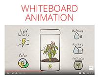 Chillio Whiteboard Animation Video