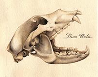 Watercolour skulls | 2015