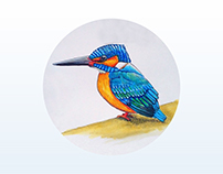 Blue Bird   Painting