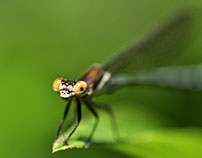 Macro Insectos