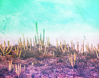 Desierto gradient / Photography