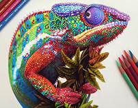 Chameleon Sketch