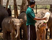 Elephant Orphanage !