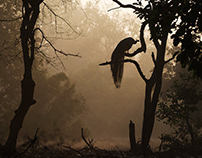 Wildlife - Bandhavgarh National Park