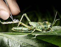 insect care