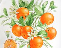 Watercolor fruits & berries