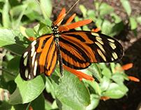 Butterfly Sizzle Reel