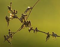 little acrobats...