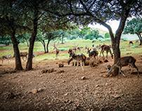 Parque Cinegetico Collado del Almendral - Cazorla - Jaé