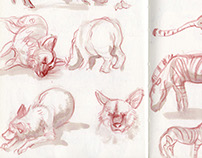 Animal sketches at Singapore Zoo