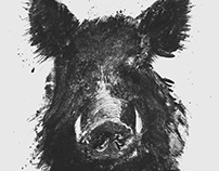 Boar – Illustration