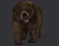 3D Bear (Animation) (FUR)(Rendering)