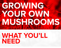 Growing Your Own Mushrooms Infographic