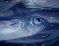 O2 - FISH