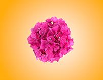 Floral Ecstacy