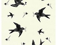 Jaskółki/Swallows