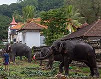 Kandy,මහනුවර,கண்டி