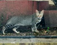 A Pose of roadside cat