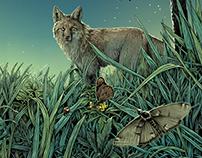 Meadow - label illustration