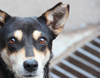 Dog sterilization program