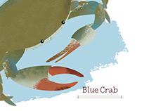 Callinectes sapidus -- Blue Crab