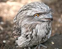 Wildlife Zoo (Australie)