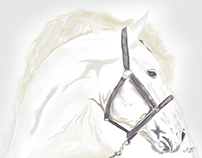 White Horse - digital painting