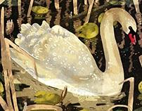 Animystics-Swan
