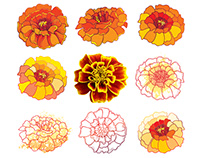 Tagetes or Marigold flower.