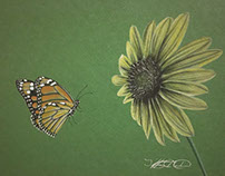 Monarch Butterfly and Wild Colorado Sunflower Drawing
