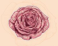 Linocut Rose