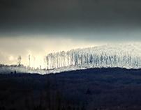 Enter the Frozen Forest