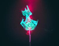 Rose, burn
