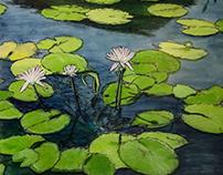 Carroll Creek Water Lilies