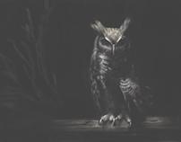 Perched Owl: Adobe Sketch