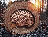 Nature's Brain