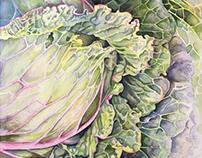 Cabbage Unfurled