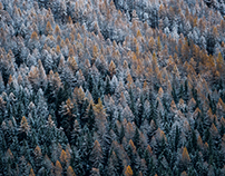 Forests Variations