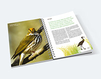 Guide d'observation d'oiseaux d'Argenteuil