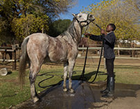 Enos Mafokate Equestrian Club of Soweto riding school
