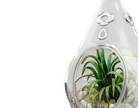 Plants in the Vase