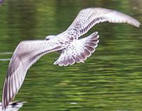 Some Of The Birds, InDublin