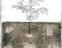 Etching Project - Scientific Illustration