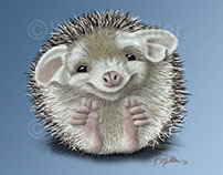 Hedgehog Cartoon